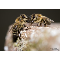Bees feeding each other!